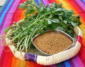 Fenugreek Leaves and Seeds.